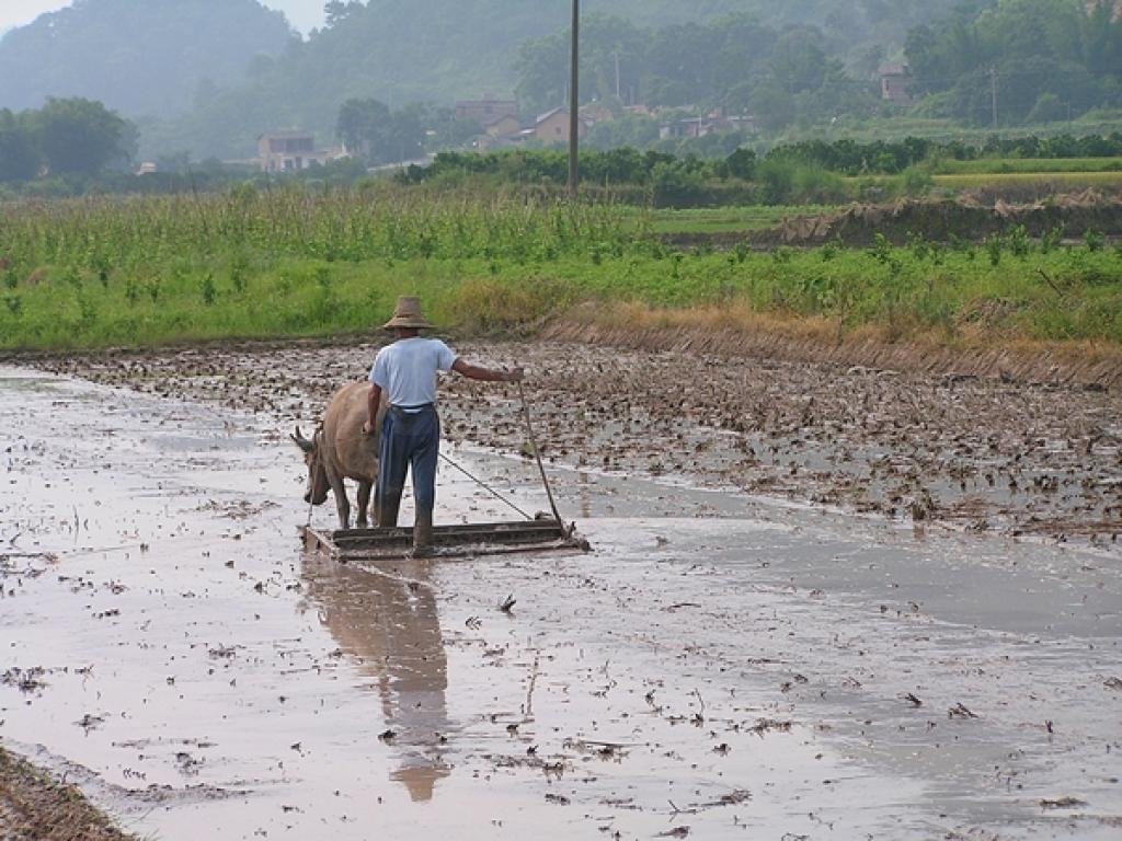Landwirtschaft auf traditionelle Art